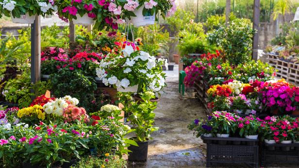 Découvrez notre boutique de fleuriste, le petit marché aux fleurs à Rouffiac