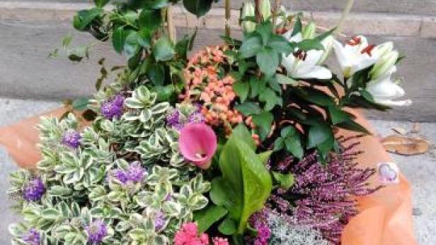 Coupe de plantes d'extérieur à Saint-Jean