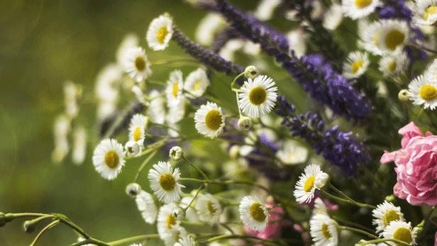 fleurs-mariage-saint-jean.png