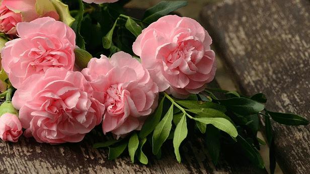 fleurs-saint-jean.png