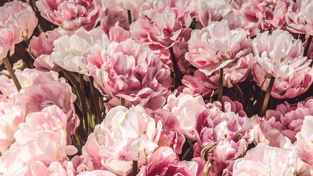 preparation-florale-mariage.png