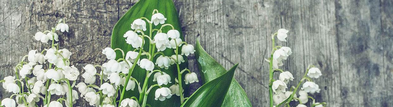 Décoration florale pour Mariage à Saint-Jean