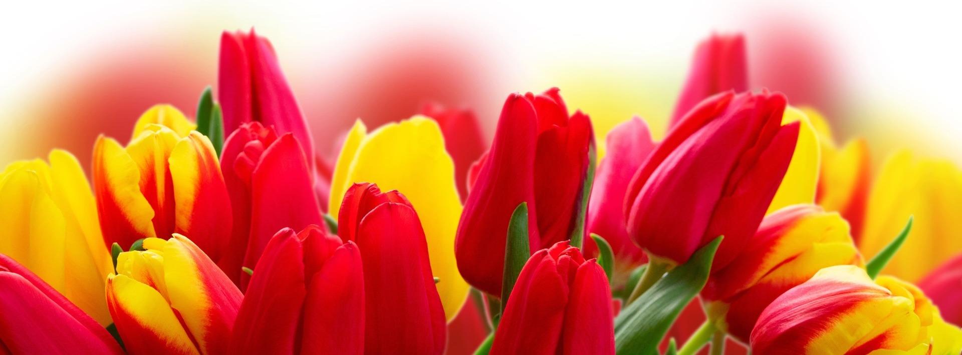 Une petite boutique pleine de charme<br>Un large choix de fleurs coupées